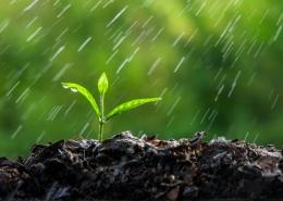 Okres jesienno zimowy to czas gromadzenia wody w profilu glebowym