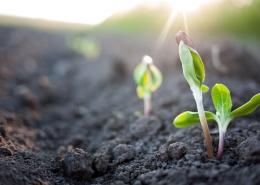 Zwiększ żyzność gleby